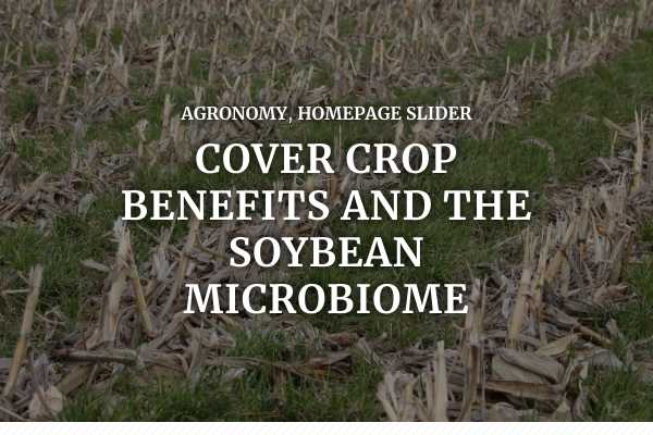 Cover crop benefits and the soybean microbiome